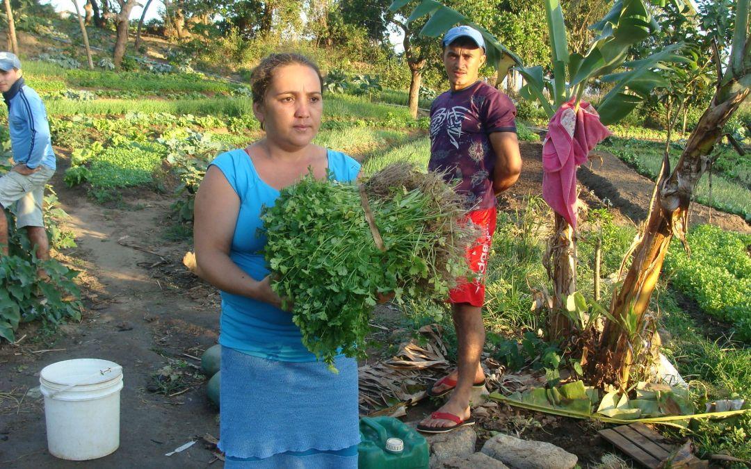 Mulheres Rurais e a construção da agroecologia: por um modelo de desenvolvimento rural inclusivo e com igualdade de gênero.