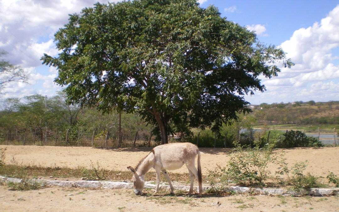 Quem decide o que se come – a perda da soberania alimentar do Brasil