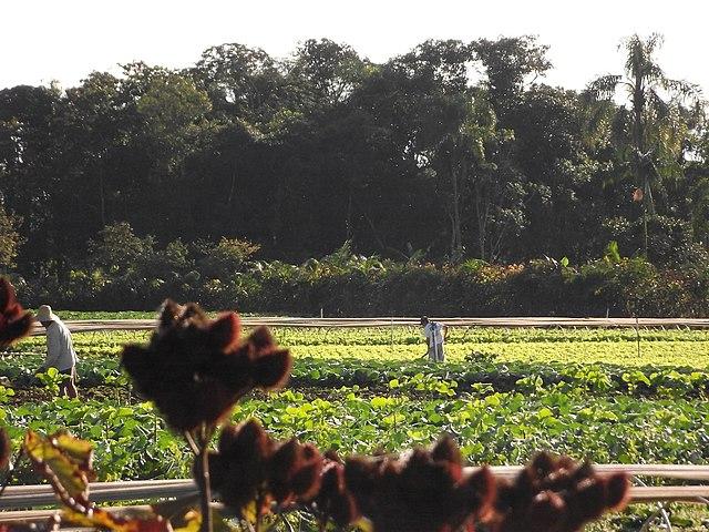 Agricultores trabajando el campo de manera ecológica