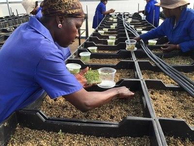 almacenamiento de semillas