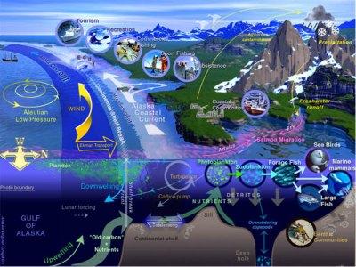 Ecosistemas marinos: tipos, servicios y riesgos
