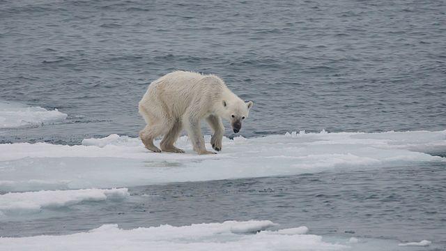 La contaminación ambiental está afectando irreversiblemente el clima global, esto ha tenido repercusión sobre todo en los ambientes árticos, disminuyendo considerablemente la biodiversidad de estos ambientes sensibles.
