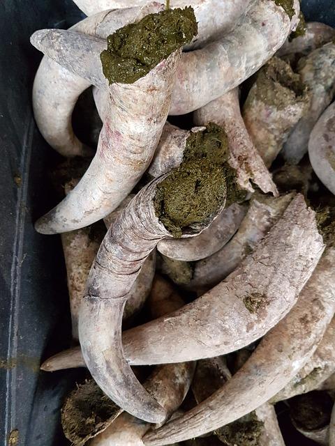 Estiércol de cuerno de vaca biodinámico