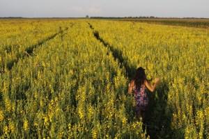 Abonos verdes y cultivos de cobertura
