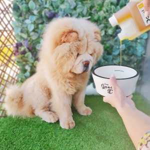 ¿Suplementos Naturales para Perros? ¡Sus beneficios!