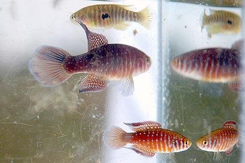 AAA imagem peixe vivo