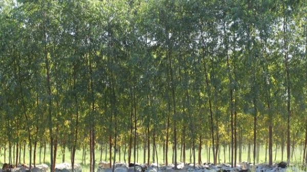 a _ florestal