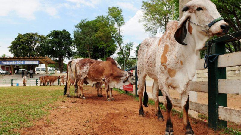 Competições entre raças de animais movimentam último dia da