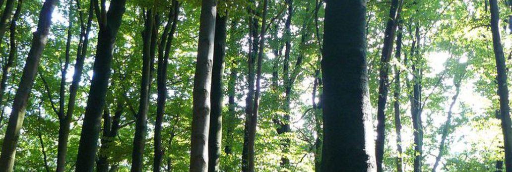 a florestas