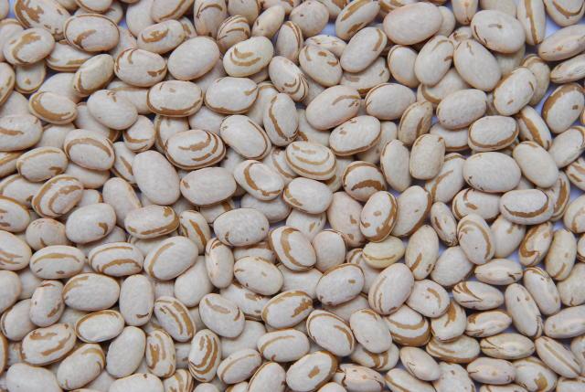 a semente feijao