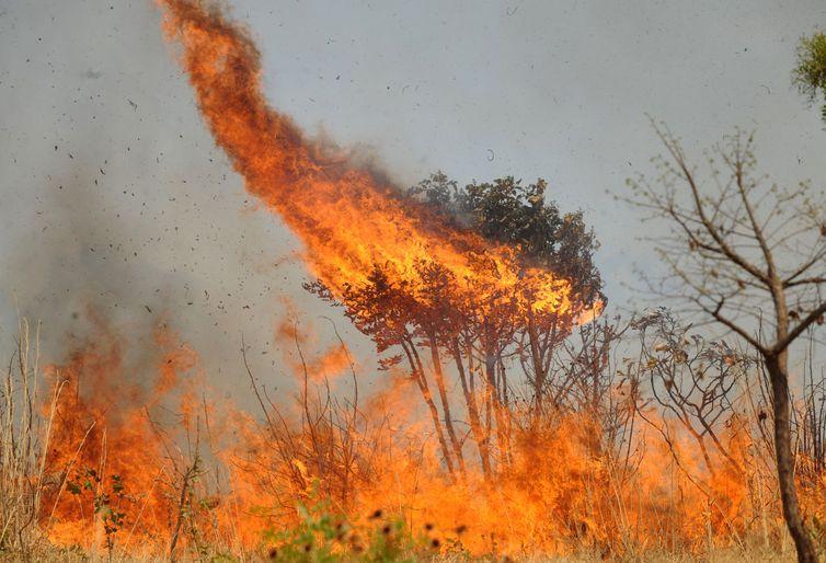 queimadas 4