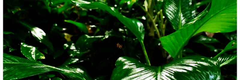 a _ codigo florestal
