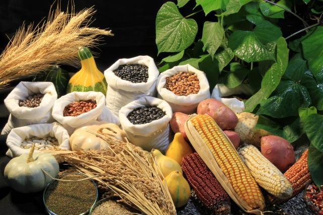 a _ sementes feijoão milho embrapa
