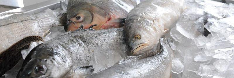 a - peixe ebc