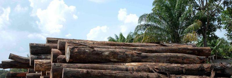a desmatamento brasil 1