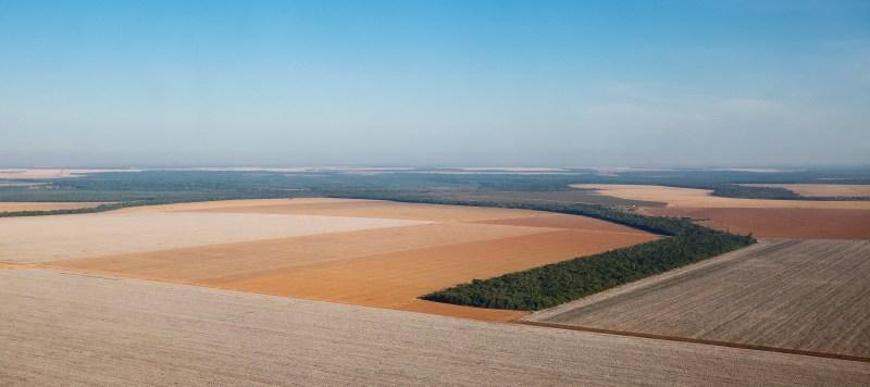 plantacao algodao panoramica