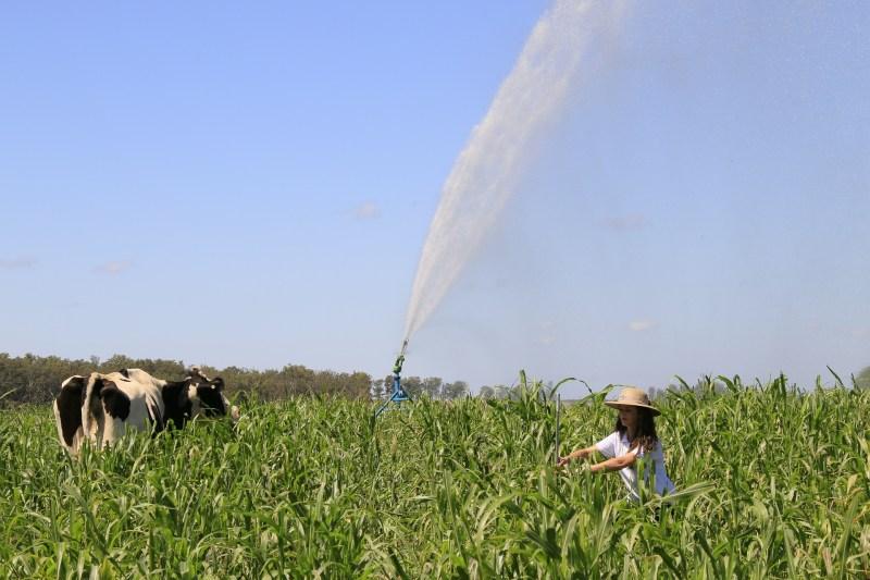 pastagens irrigadas