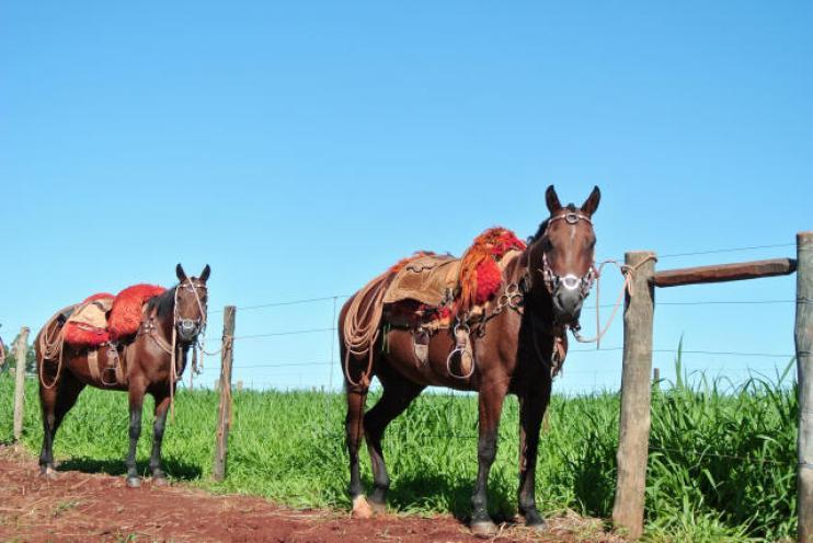 cavalos arreios