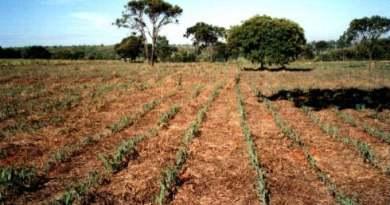 Abertas inscrições para seminário sobre conservação do solo em Brasília