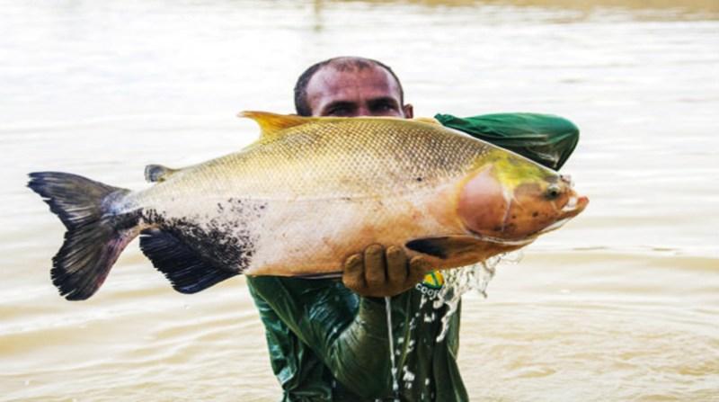 peixe embrapa pesquisa 23
