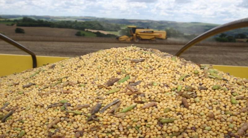 soja colheita 10
