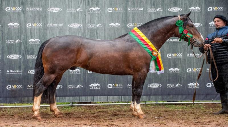 cavalo justo