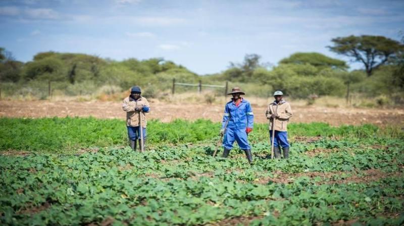coopertivismo africa 1