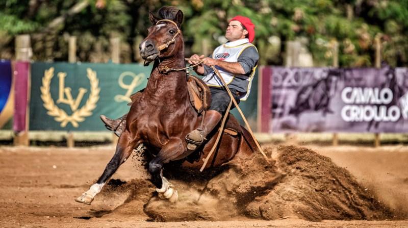 egua cambraia