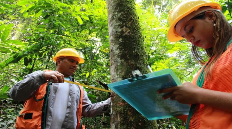 software manejo floresta amazonia