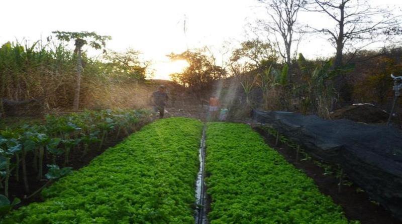 agricultura norte minas 17 7
