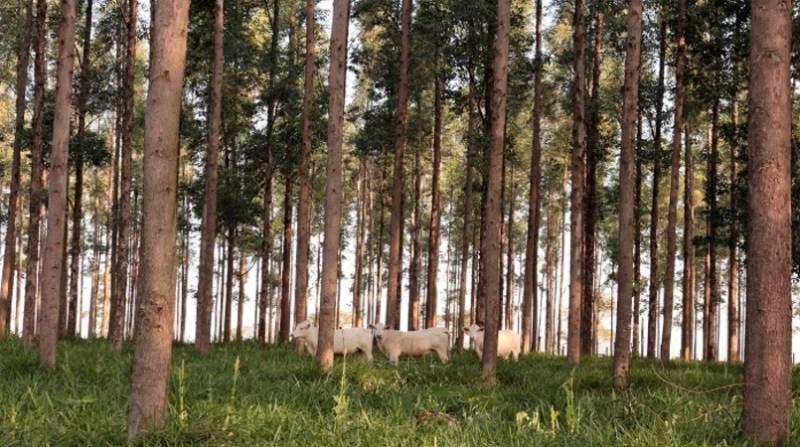 florestas plantadas embrapa 4 7 18