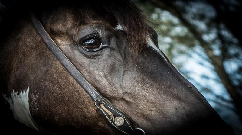 cavalo perfil Fagner Almeida Divulgação agroeffective