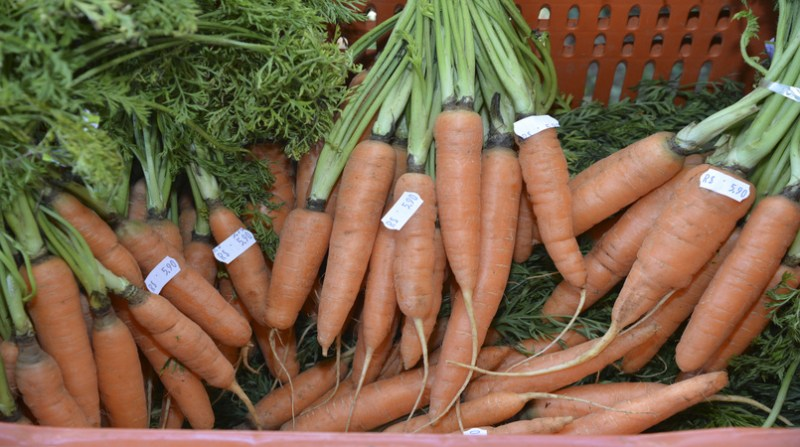 cenoura organica