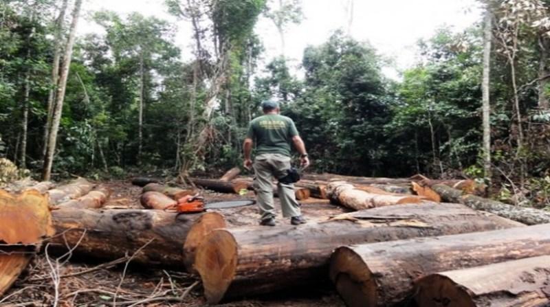 desmatamento amazonia 3 19 8
