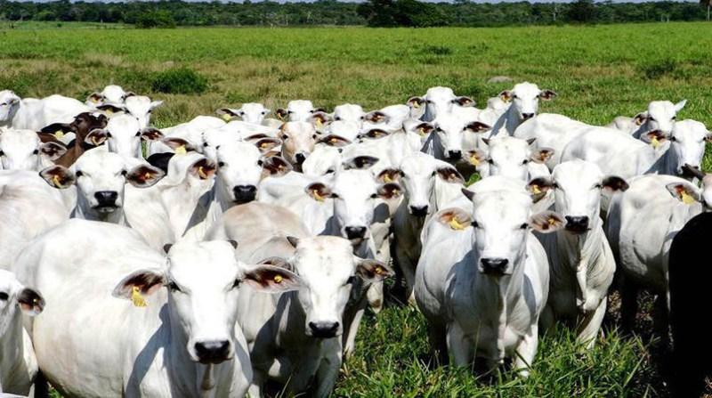 Resultado de imagem para Produção e consumo crescente de carne afetam desmatamento na Amazônia, dizem especialistas