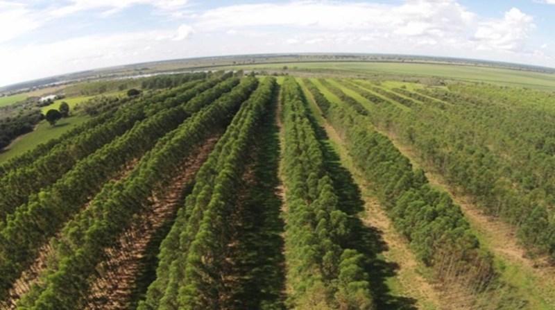 integracao-lavoura-pecuaria-floresta-plantacao-embrapa 000