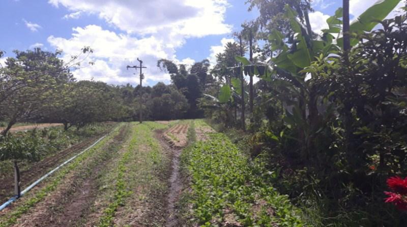 sistema agrofloresta