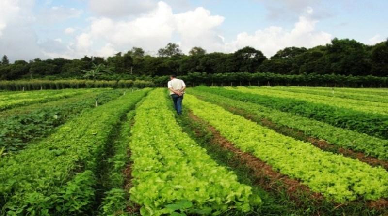 agroecologia e organico 17