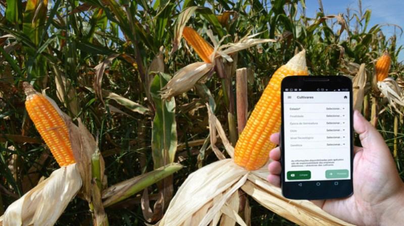 aplicativo doutor milho cultivares