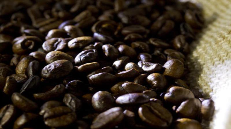 cafeembrapa18
