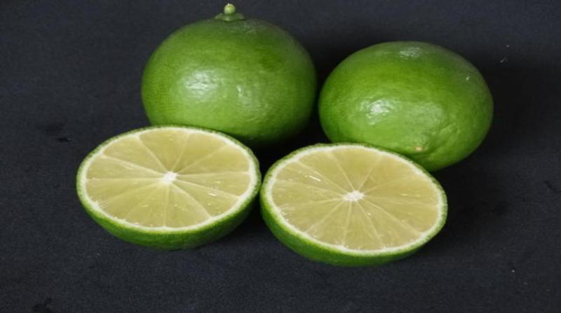 limão-embrapa-Léa Cunha.jpg28