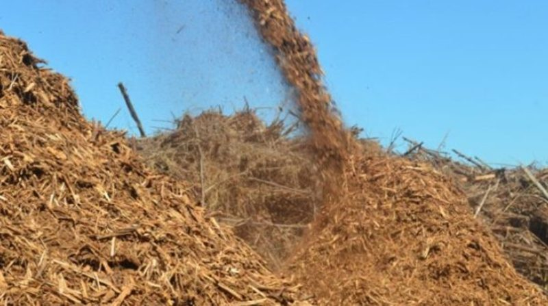 biomassa 6