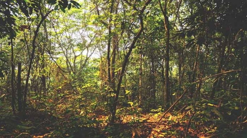 florestas plantadas 9 10