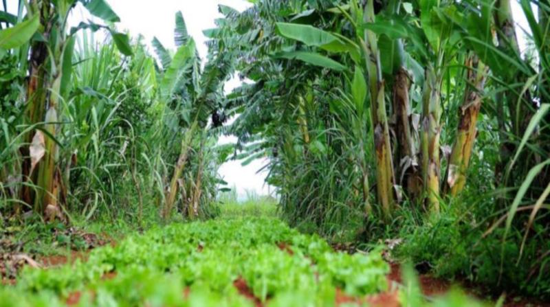 agroecologia producao organica df