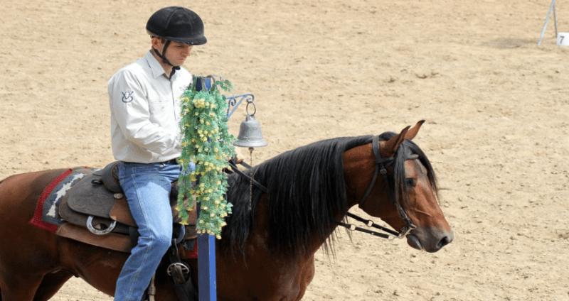 mangalarga machador cavalo divulgaçao