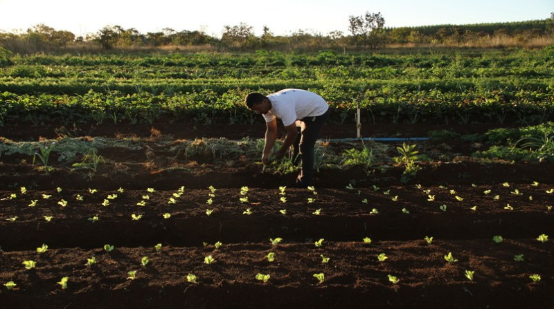 agricultor trabalho 4 12