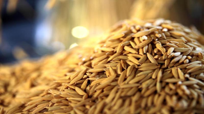 arroz arroz 10 12