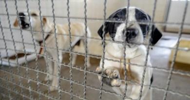 Polícia Ambiental usa WhatsApp para incentivar adoção de cães e gatos