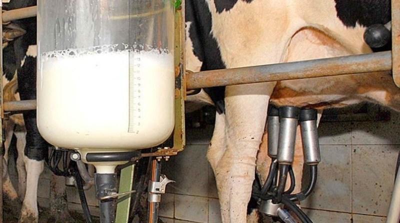 ordenha leite 6 12 fotos publicas