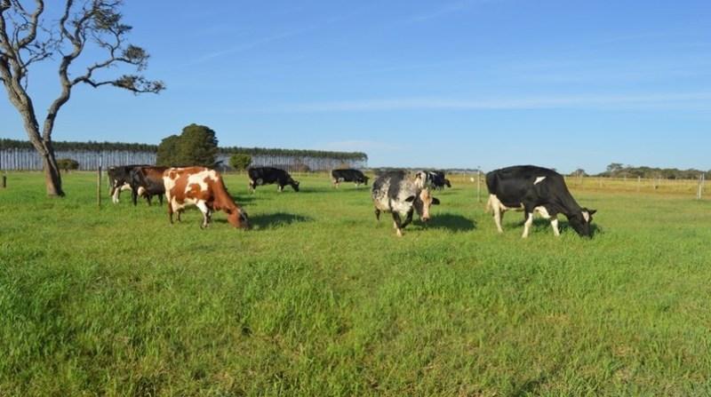 bovinos bovinos 25 1 19